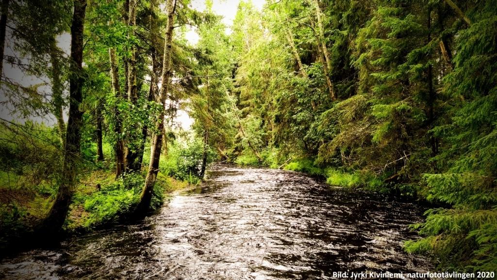 Skogslandskap med en flod. Bild: Jyrki Kiviniemi, naturfototävlingen 2020